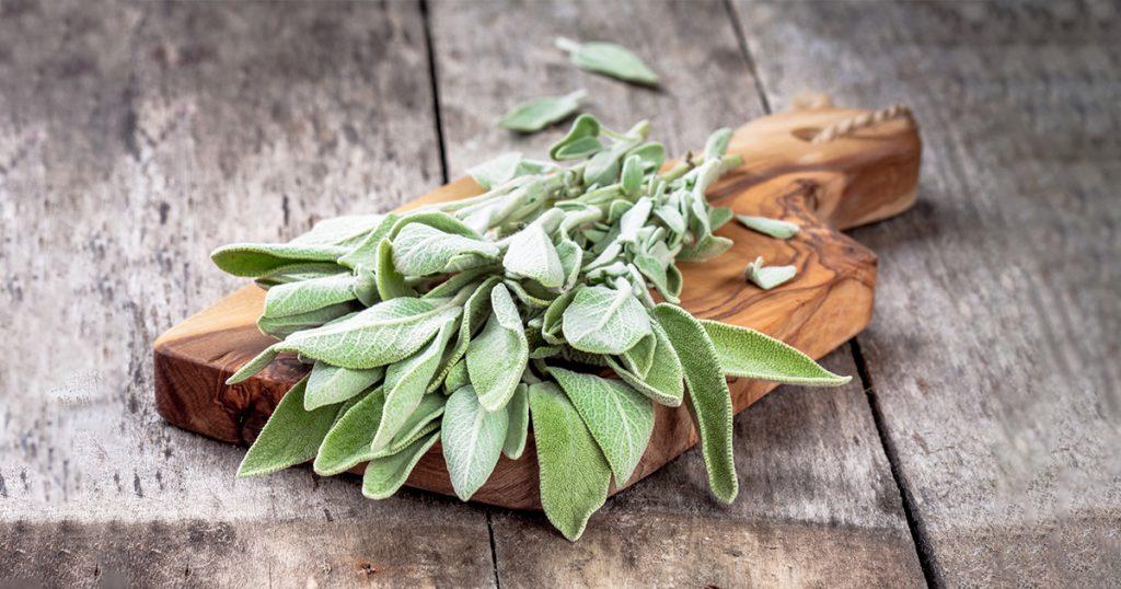 Salvia finns i Premens, bidrar till välbefinnande i samband med menstruation